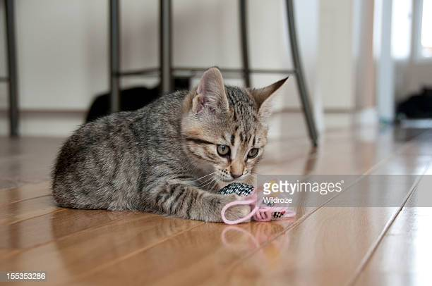 Cute kitten plays with toy mouse