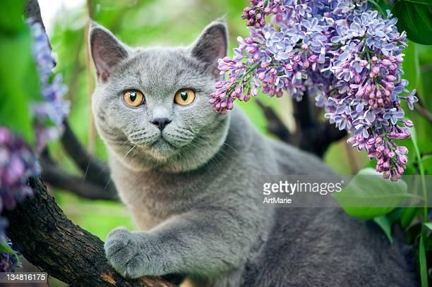 Süße Kätzchen auf einem Baum