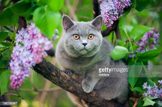 Mignon Chaton marcher sur un arbre