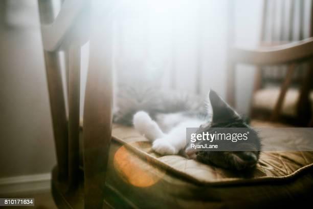 Cute Kittens Sleeping on Chair