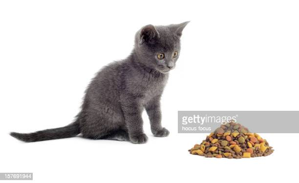 Cute Kitty and mixed cat food
