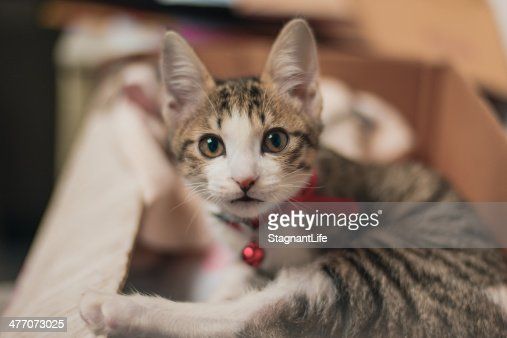A cute kitty : Stock Photo
