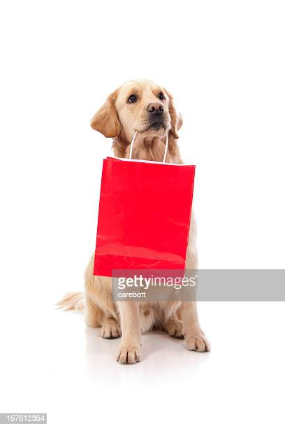 A cute labrador holding a red shopping bag with its teeth