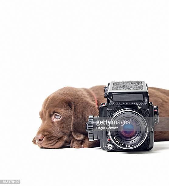 Cute labrador puppy with vintage camera