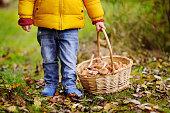 Cute little boy picking mushroom in basket. Summer outdoors activity for kids