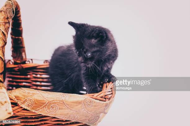 Cute little cat in the basket