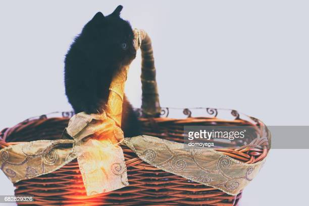 Cute little cat in wooden basket