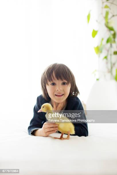 Cute little child, boy with duckling springtime, playing together, little friend, childhood happiness