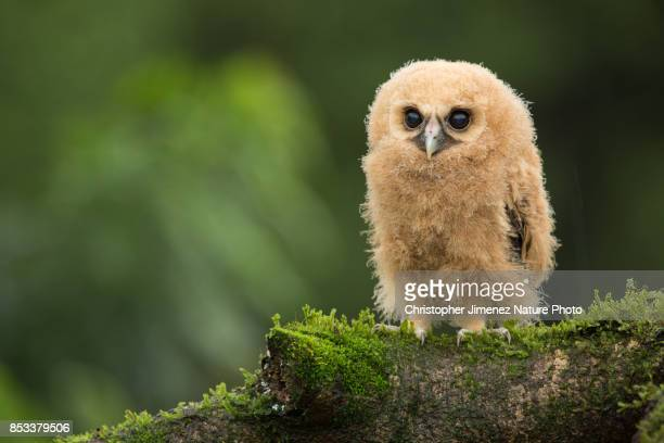Cute little fluffy owl perched on a tree during the day