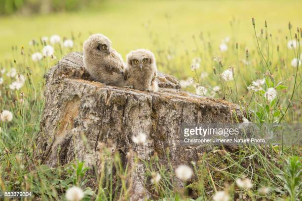 Cute little owls sitting on a tree during the day