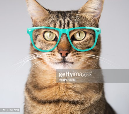 Cute modern cat in blue glasses
