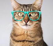 Cute modern cat in blue glasses