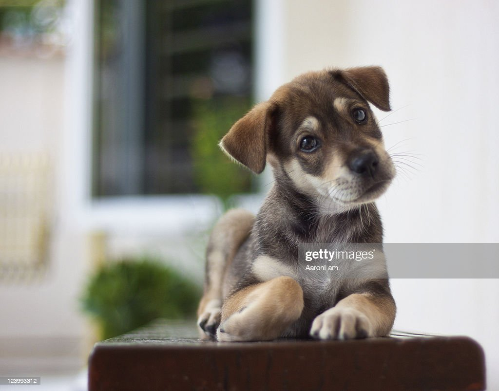 Cute Mongrel Puppy Stock Photo Getty Images