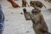 Cute monkeys asking for food.