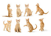 Same cute and playful small orange tabby kitten in eight different positions