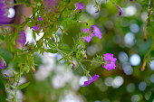 cute petunia flowers