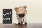 cute pug puppy dog with bad monday morning mood, sitting next to blackboard sign with text happy monday, with copy space