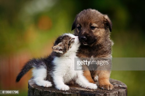 cute puppy and kitten on the grass outdoor; : Foto stock