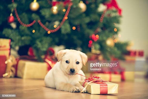 かわいい子犬のクリスマスのお祝い