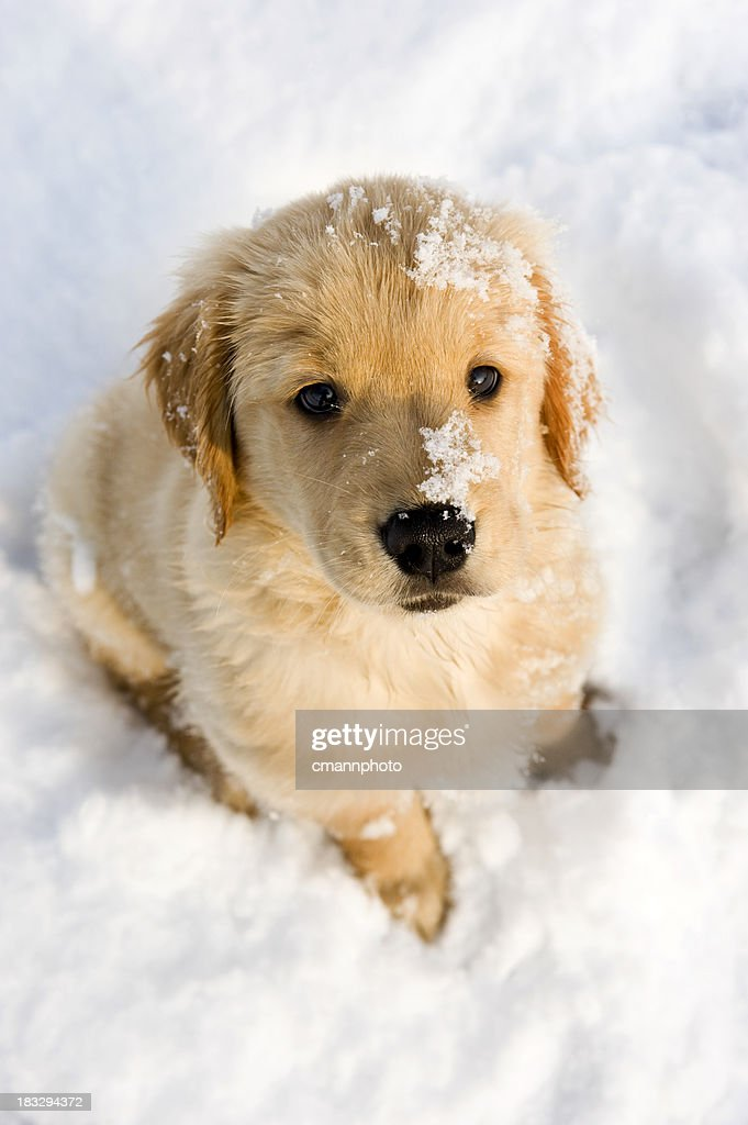 Puppy in the snow : Stock Photo