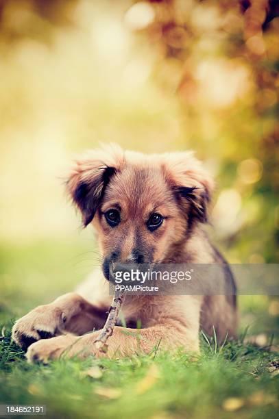 Linda cachorro sentar en el césped