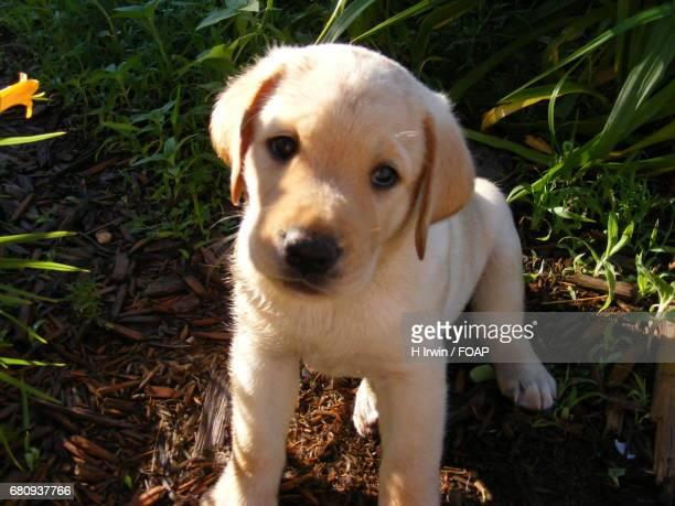 Cute puppy looking away