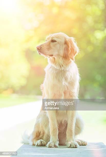 Linda cachorro