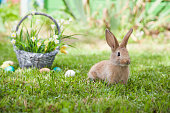 Cute rabbit with nice basket and painted Easter eggs.