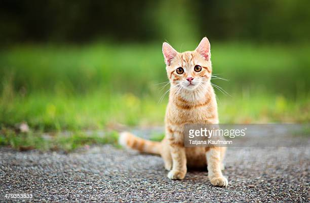 Cute red tabby Kitten sitting and looking confused