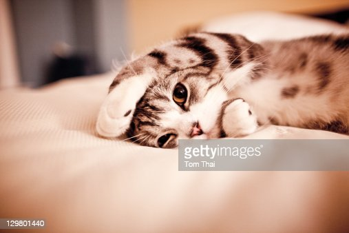 Cute small cat : Stock Photo