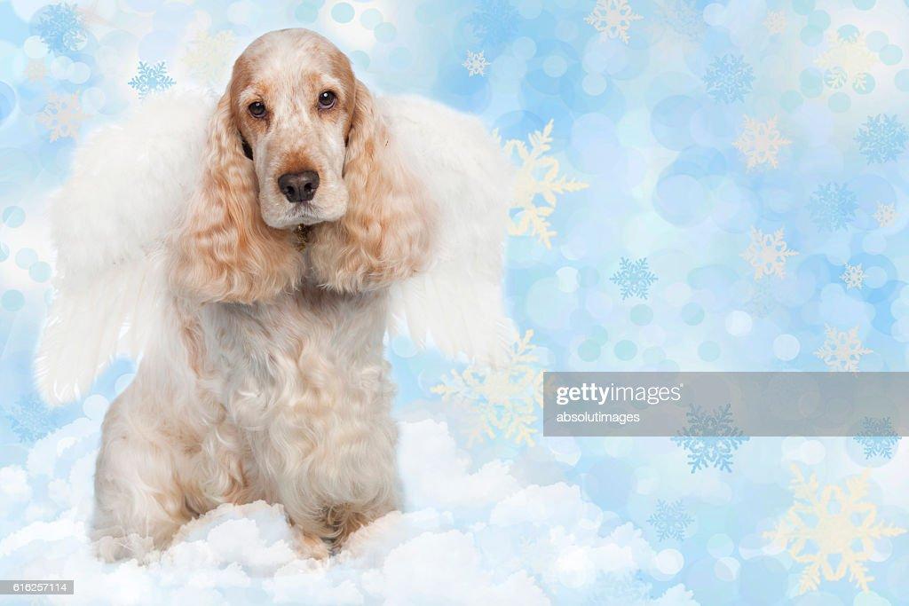 Cute spaniel dog with angel wings : Foto de stock