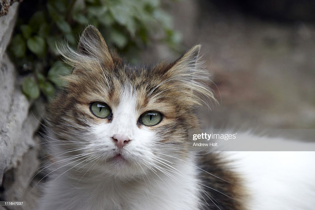 Cute stray cat in Istanbul, turkey : Stock Photo