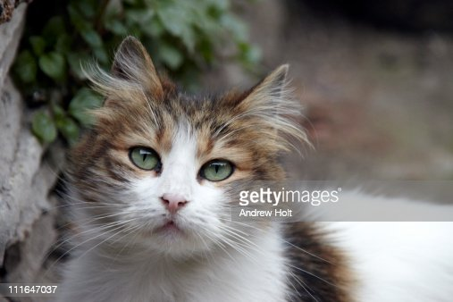 Cute stray cat in Istanbul, turkey : Foto de stock