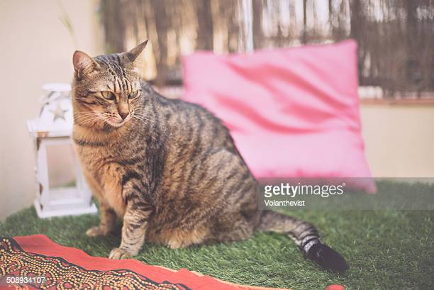 Cute striped cat on the grass at home terrace