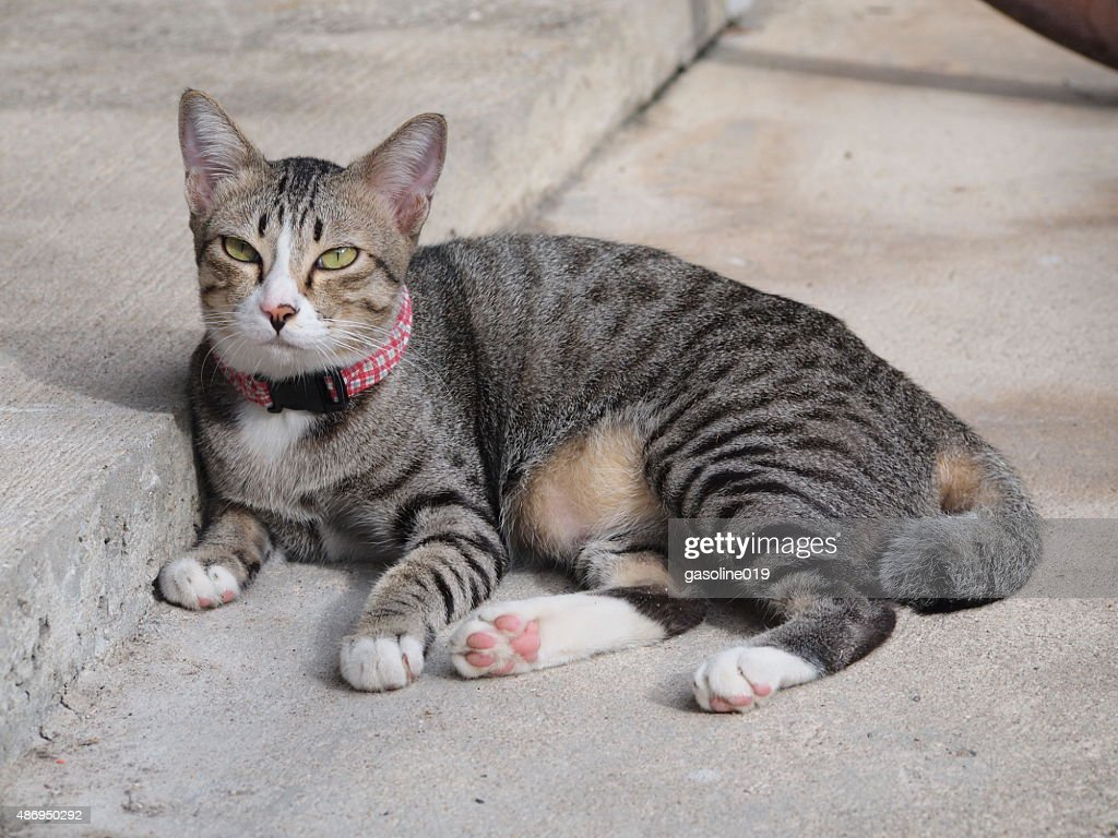 Cute Tabby Cat Lay Down On The Floor : Stock Photo