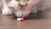 Cute tabby cat sniffs on medicine capsules.