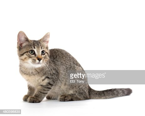cute tabby kitten : Stock Photo