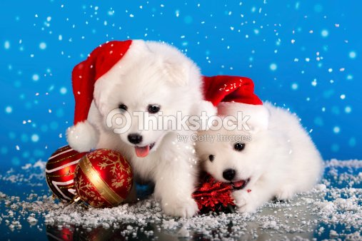 Cute White Fluffy Puppies In The Snow With Santa Hats Stock Photo
