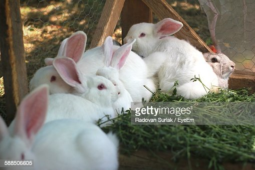 Cute Young Rabbits In Pen