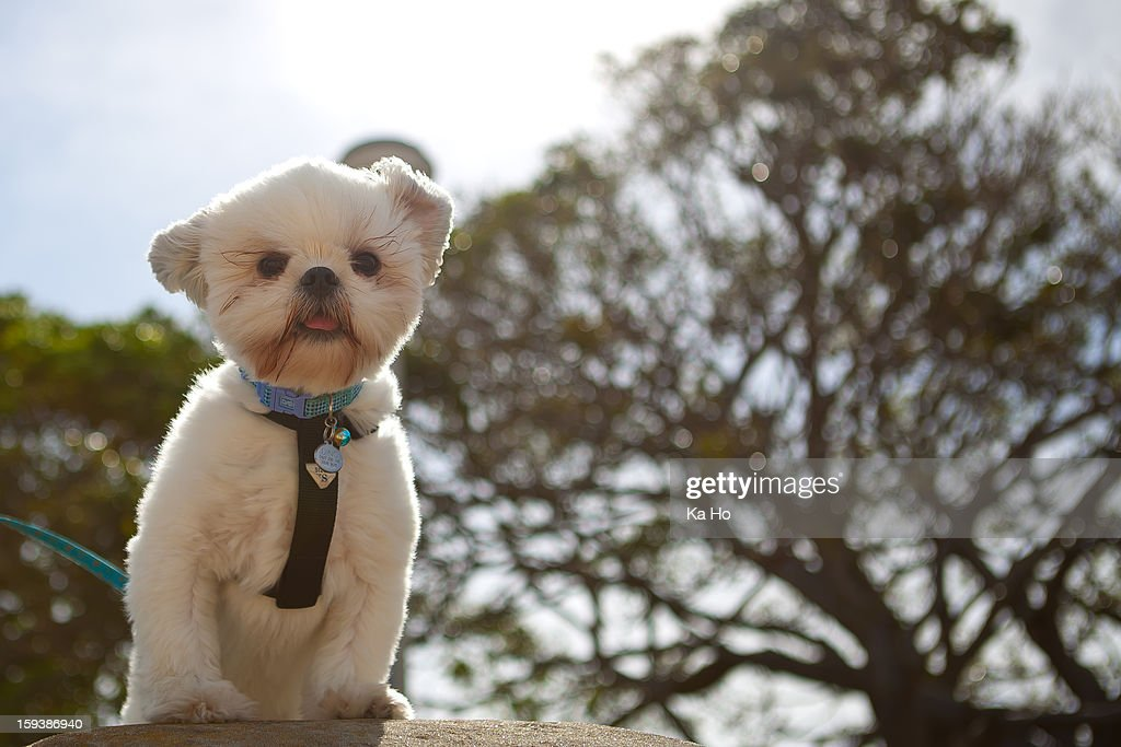 Cutie Doggy : Stock Photo