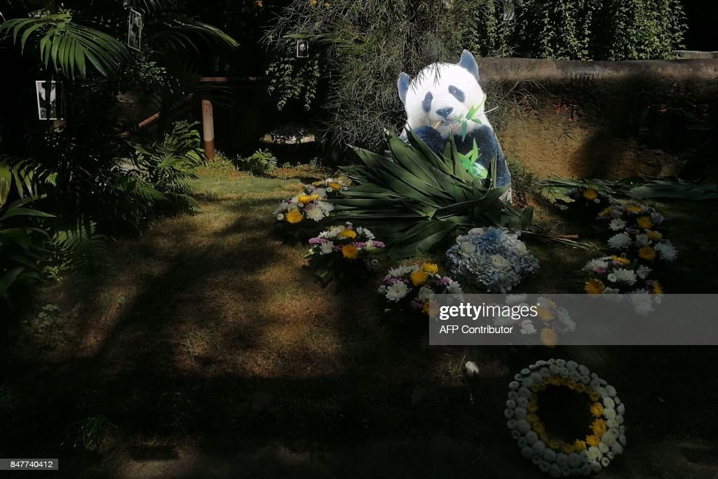 A cutout with an image of the world's oldest panda 'Basi' is seen during her memorial at the Fuzhou Panda World in Fuzhou in China's eastern Fujian province on September 16, 2017. The world's oldest captive giant panda has died at age 37 -- more than 100 years in human years -- her handlers in China said on September 14, as they gave 'Basi' an emotional send-off befitting a minor celebrity. / AFP PHOTO / STR / China OUT