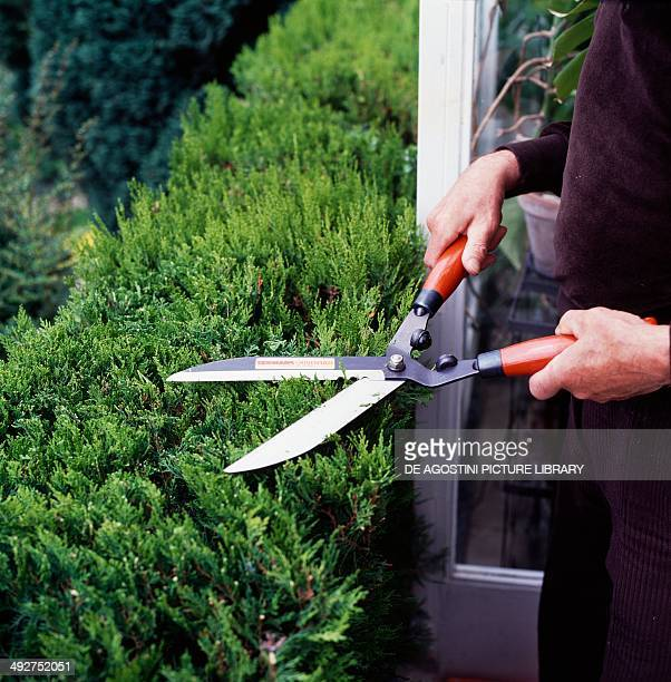 Cutting a hedge with hedge shears