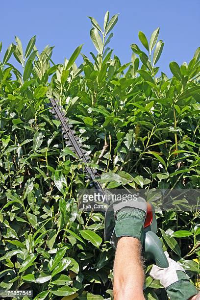 Couper un arbre # 2 XL