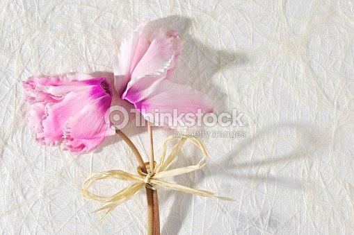 Alpenveilchen Blumenstrauss Karte Mit Blumen Fur Geburtstag Jubilaum