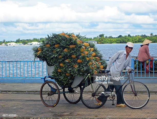 CONTENT] Cycle rickshaw man with fresh pineapples heading for Vinh Long fruit market Walking along Mekong river road