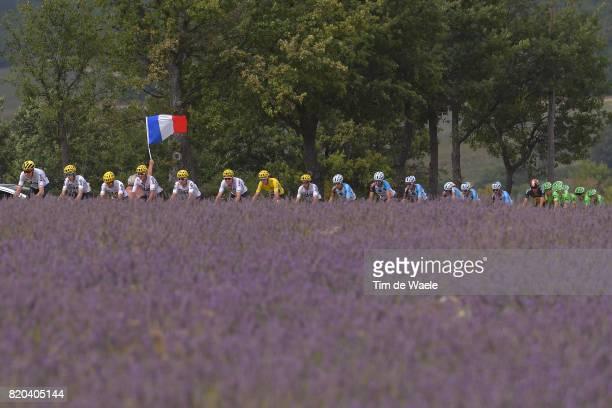 104th Tour de France 2017 / Stage 19 Peloton / Team Sky / Christopher FROOME Yellow Leader Jersey / Lavendel Flowers / Landscape / Romain BARDET /...