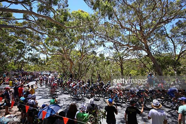 19th Santos Tour Down Under 2017/ Stage 5 Men Peloton / Old Willunga Hill / Fans / Public / Forest / McLaren Vale Willunga Hill 382m / BikeExchange...