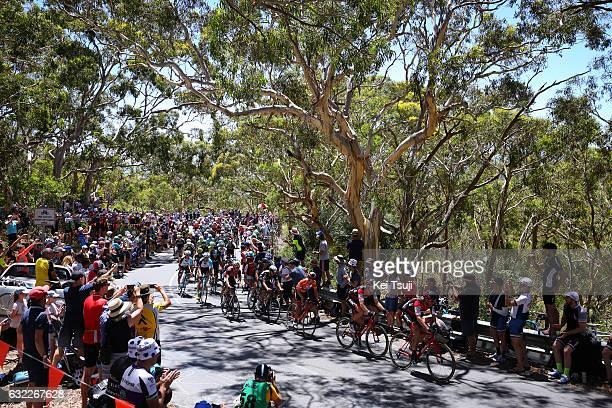 19th Santos Tour Down Under 2017/ Stage 5 Men Richie PORTE Orange Leader Jersey /Peloton / Old Willunga Hill / Fans / Public / Forest / McLaren Vale...