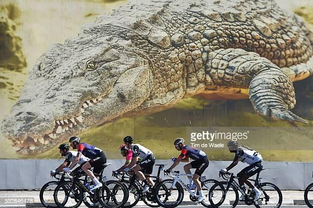 3th Dubai Tour 2016 / Stage 4 Illustration Illustratie / WIGGINS Bradley / Peleton Peloton / Alligator Crocodile / Landscape Paysage Landschap /...