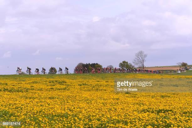 52nd Amstel Gold Race 2017 / Men Peloton / Flowers / Landscape / Maastricht Valkenburg / Men /